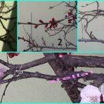 la primavera e i suoi colori