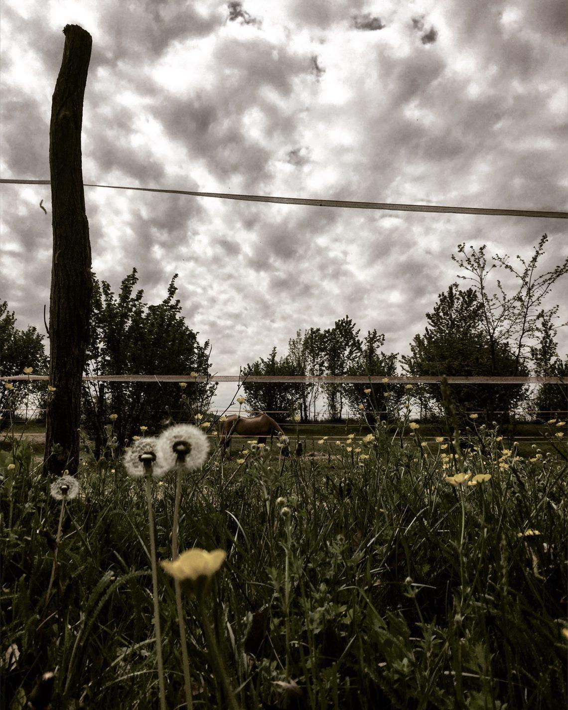 La primavera al tempo del COVID 19